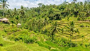 vakantiewoningen in Bali